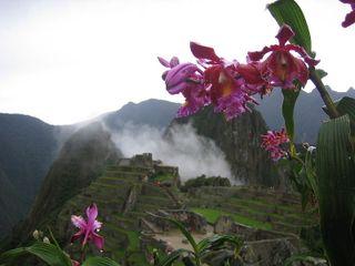MachuPicchu_orchids